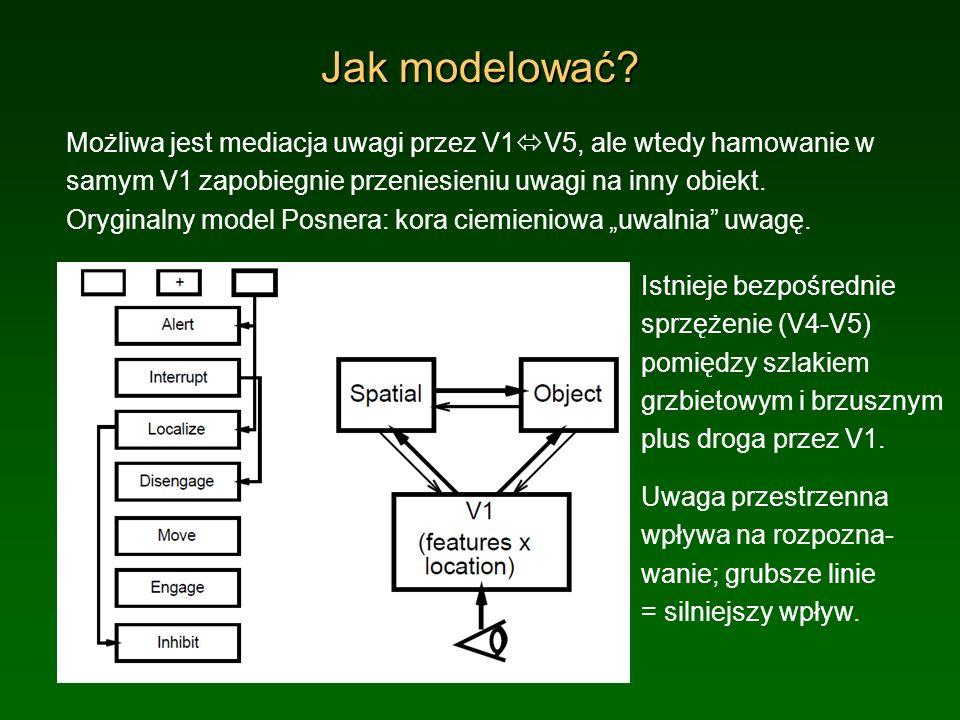 Jak modelować Możliwa jest mediacja uwagi przez V1V5, ale wtedy hamowanie w samym V1 zapobiegnie przeniesieniu uwagi na inny obiekt.