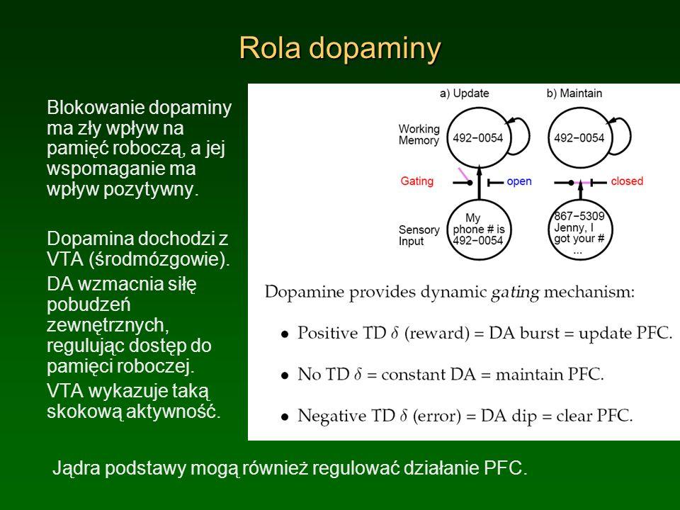 Rola dopaminy Blokowanie dopaminy ma zły wpływ na pamięć roboczą, a jej wspomaganie ma wpływ pozytywny.