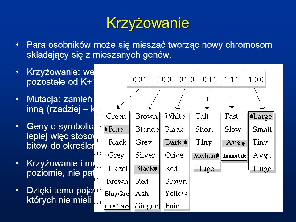 KrzyżowaniePara osobników może się mieszać tworząc nowy chromosom składający się z mieszanych genów.