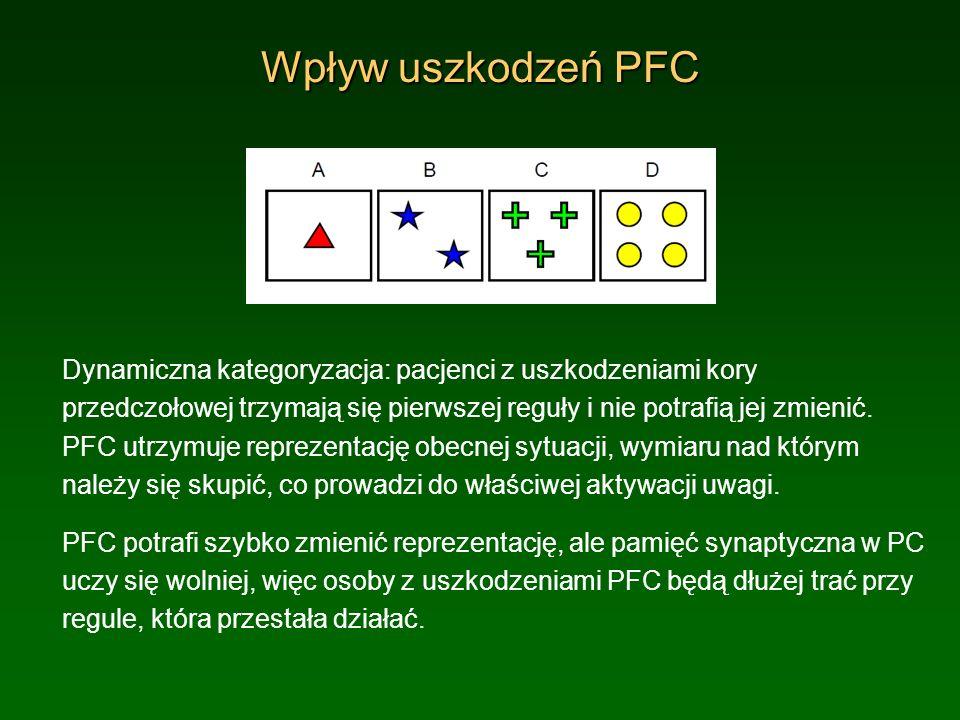 Wpływ uszkodzeń PFCDynamiczna kategoryzacja: pacjenci z uszkodzeniami kory przedczołowej trzymają się pierwszej reguły i nie potrafią jej zmienić.