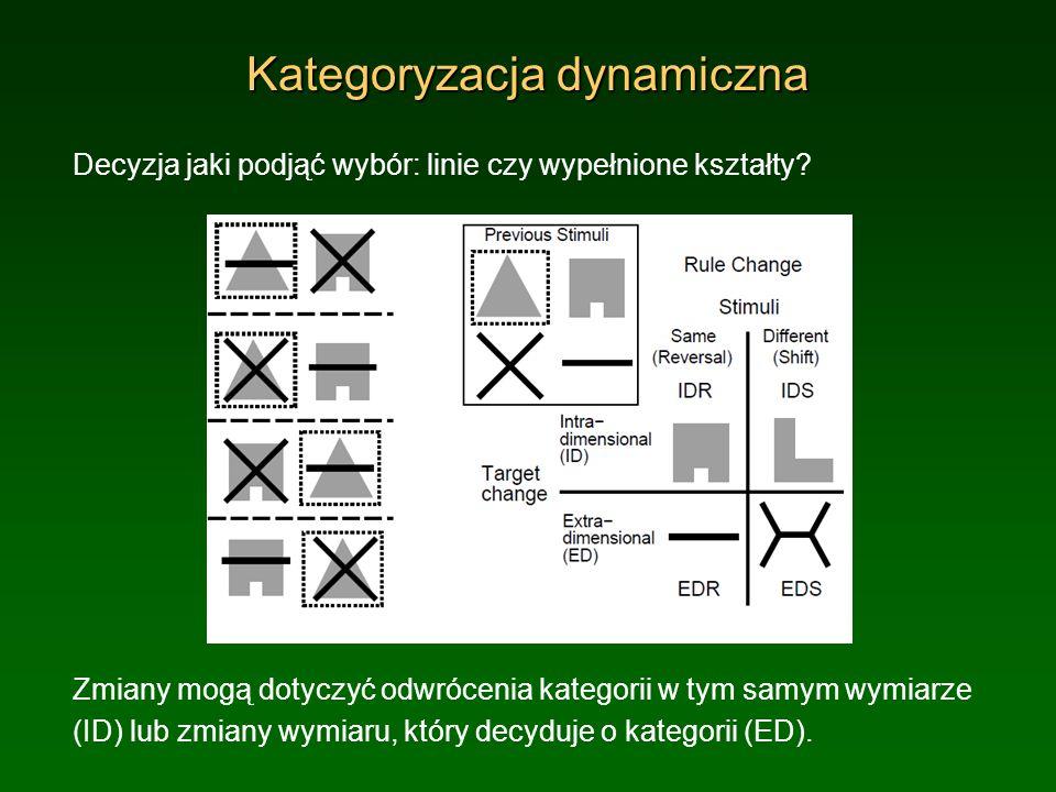 Kategoryzacja dynamiczna