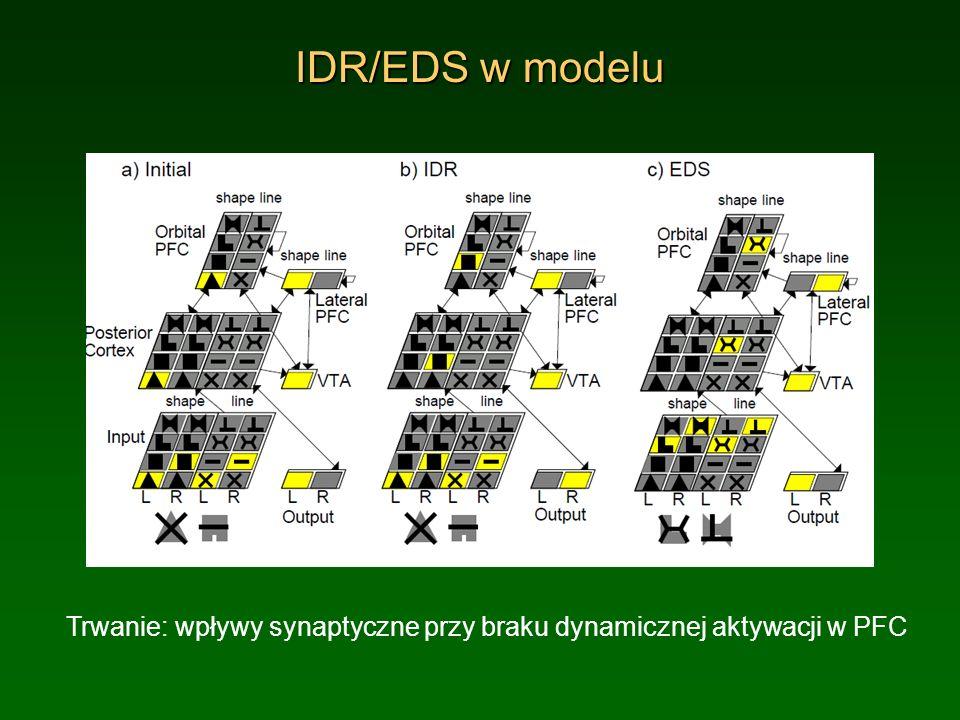 IDR/EDS w modelu Trwanie: wpływy synaptyczne przy braku dynamicznej aktywacji w PFC.