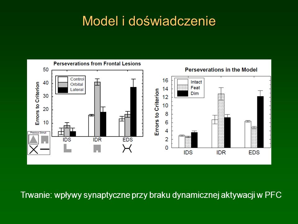 Model i doświadczenie Trwanie: wpływy synaptyczne przy braku dynamicznej aktywacji w PFC.