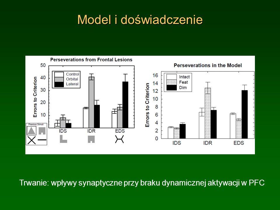 Model i doświadczenieTrwanie: wpływy synaptyczne przy braku dynamicznej aktywacji w PFC.