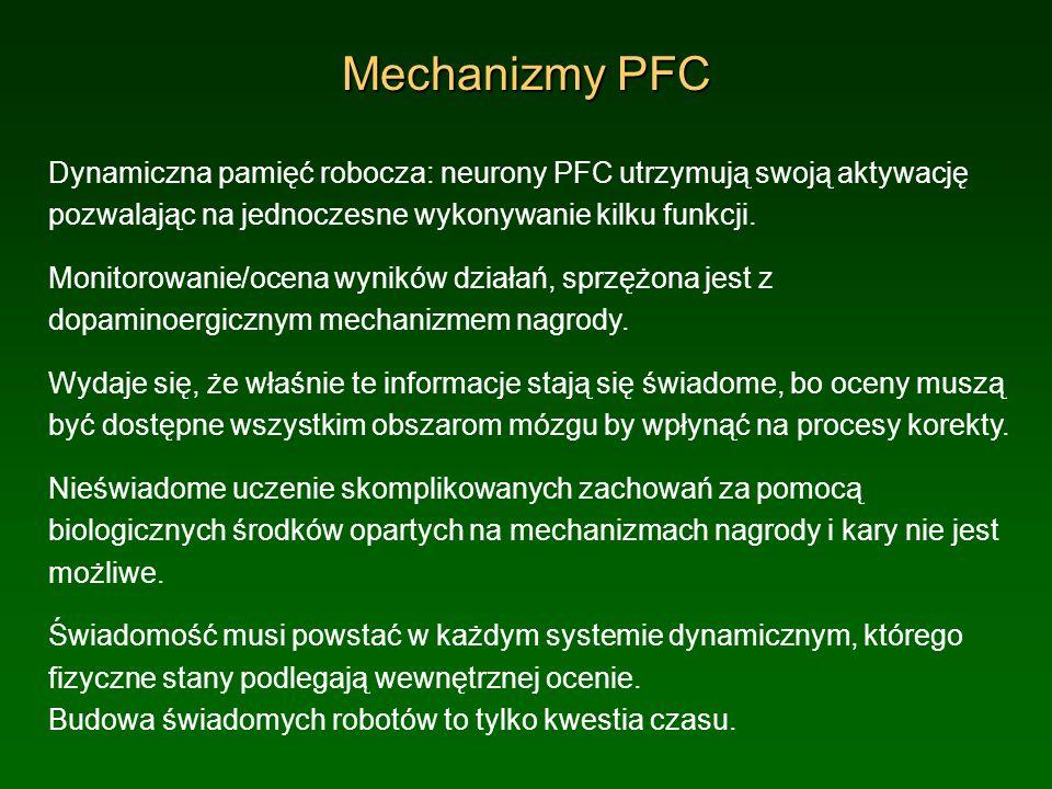 Mechanizmy PFCDynamiczna pamięć robocza: neurony PFC utrzymują swoją aktywację pozwalając na jednoczesne wykonywanie kilku funkcji.