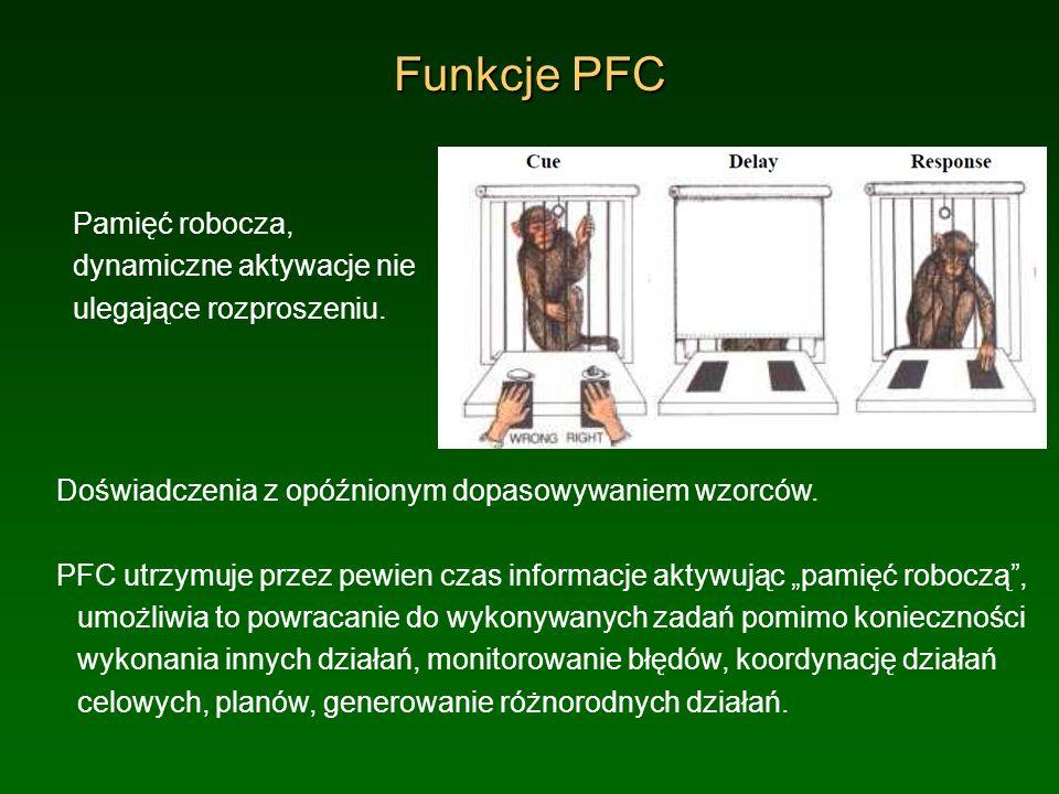 Funkcje PFCPamięć robocza, dynamiczne aktywacje nie ulegające rozproszeniu. Doświadczenia z opóźnionym dopasowywaniem wzorców.