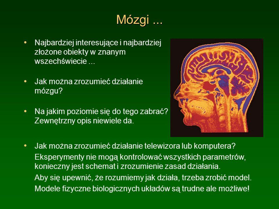 Mózgi ... Najbardziej interesujące i najbardziej złożone obiekty w znanym wszechświecie ... Jak można zrozumieć działanie mózgu