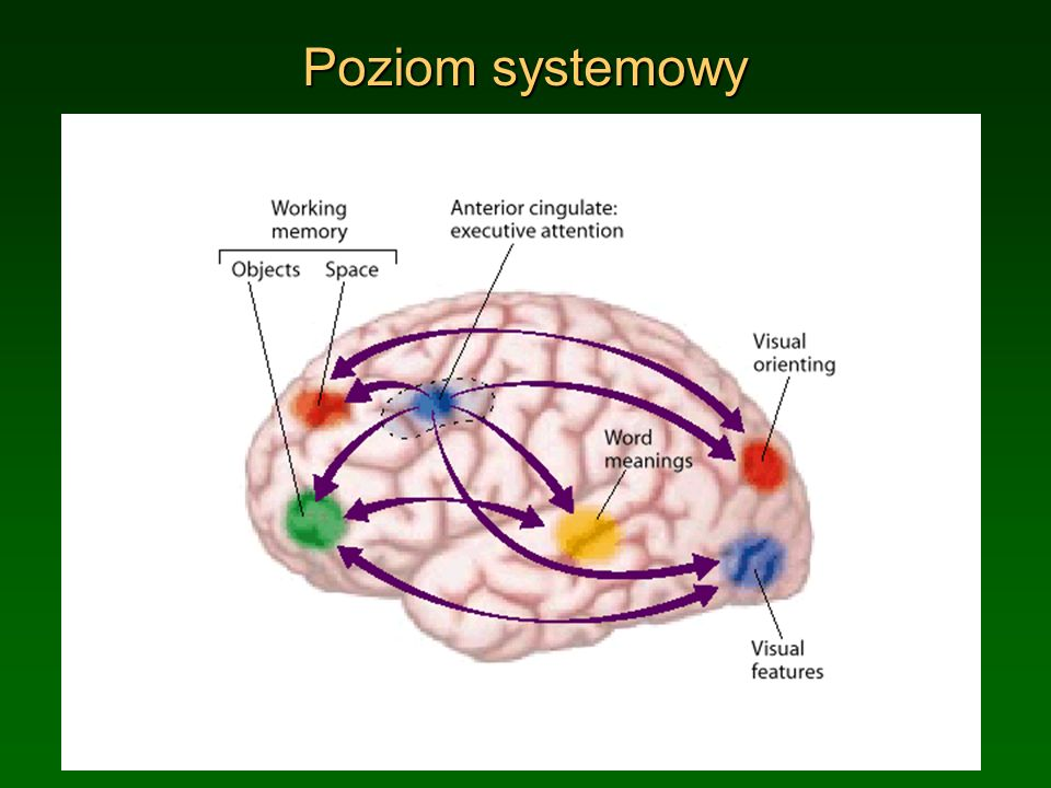 Poziom systemowy (c) 1999. Tralvex Yeap. All Rights Reserved