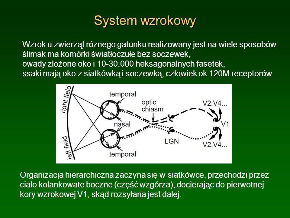 System wzrokowy