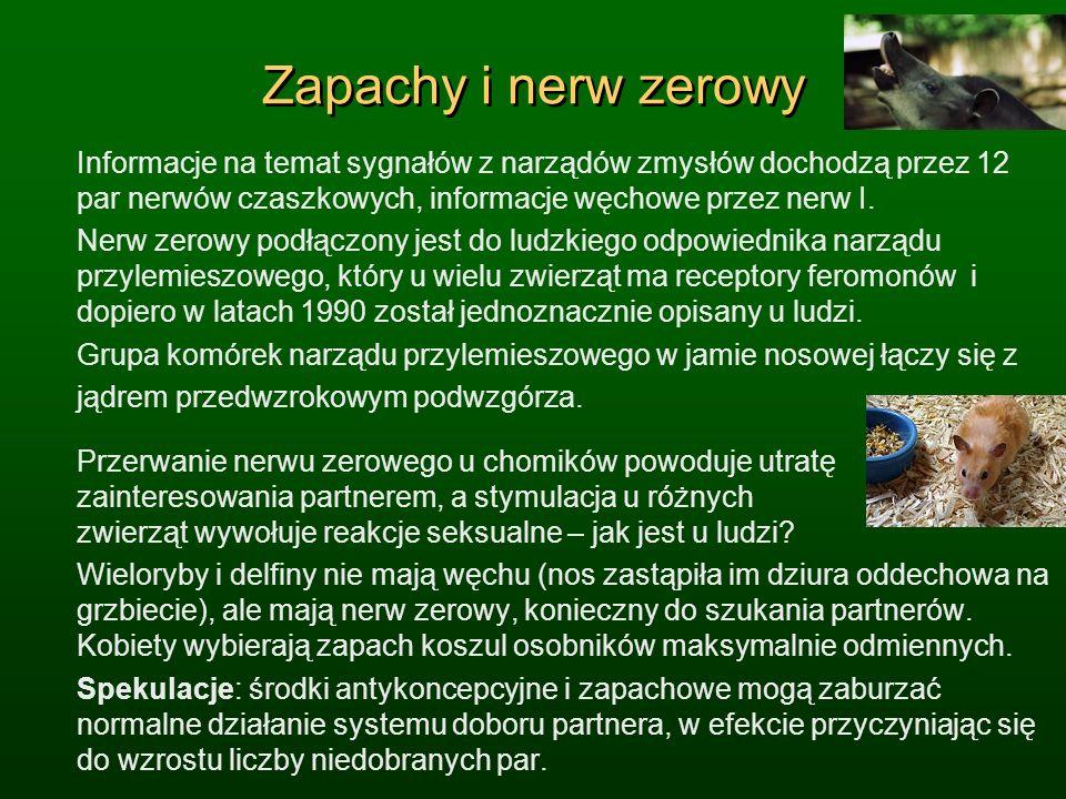 Zapachy i nerw zerowy Informacje na temat sygnałów z narządów zmysłów dochodzą przez 12 par nerwów czaszkowych, informacje węchowe przez nerw I.