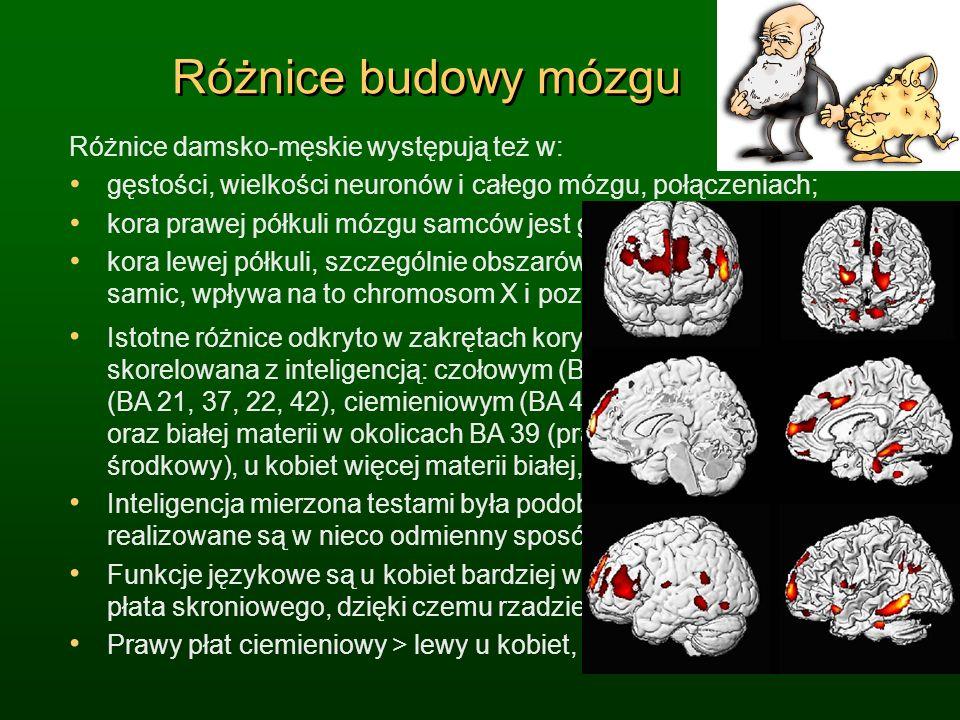 Różnice budowy mózgu Różnice damsko-męskie występują też w: