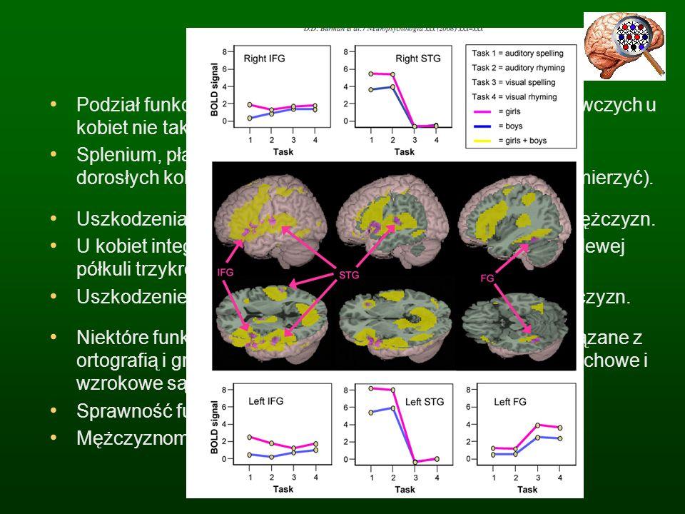 Budowa mózgu Podział funkcji półkul mózgowych i lokalizacja funkcji poznawczych u kobiet nie tak wyraźna jak u mężczyzn.