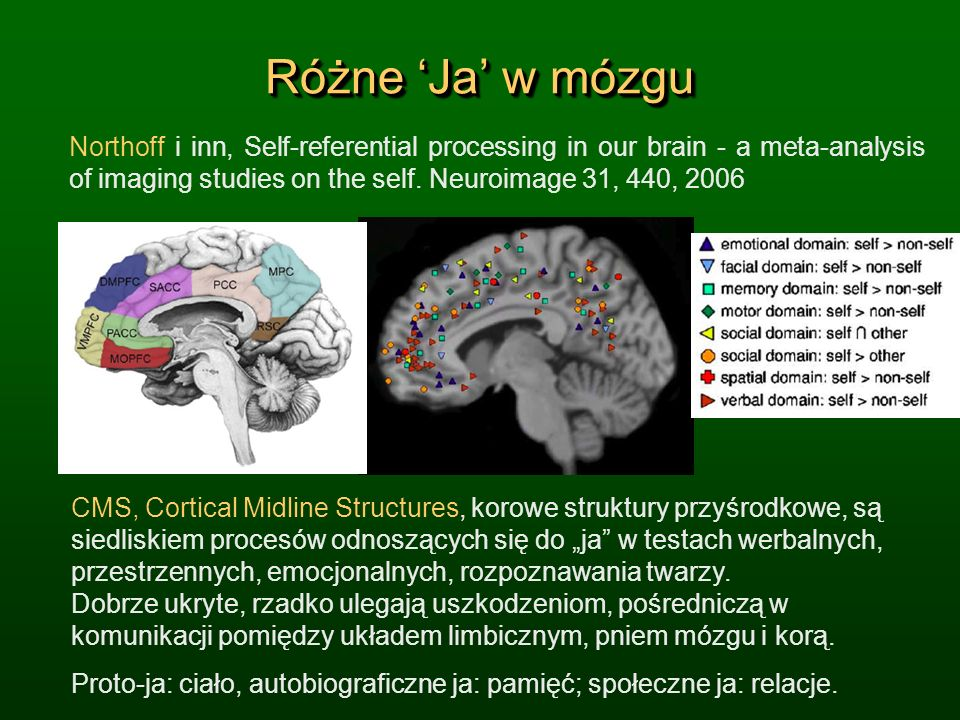 Różne 'Ja' w mózgu