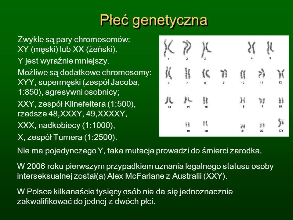 Płeć genetyczna Zwykle są pary chromosomów: XY (męski) lub XX (żeński). Y jest wyraźnie mniejszy.