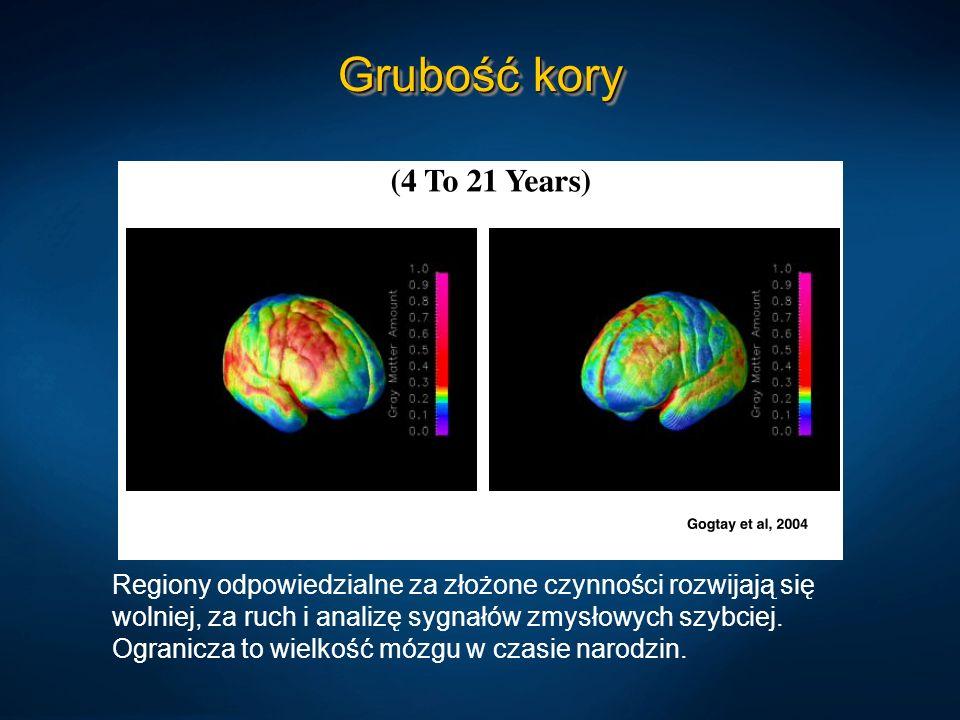 Grubość koryRegiony odpowiedzialne za złożone czynności rozwijają się wolniej, za ruch i analizę sygnałów zmysłowych szybciej.