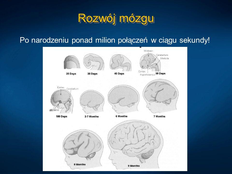 Rozwój mózgu Po narodzeniu ponad milion połączeń w ciągu sekundy!