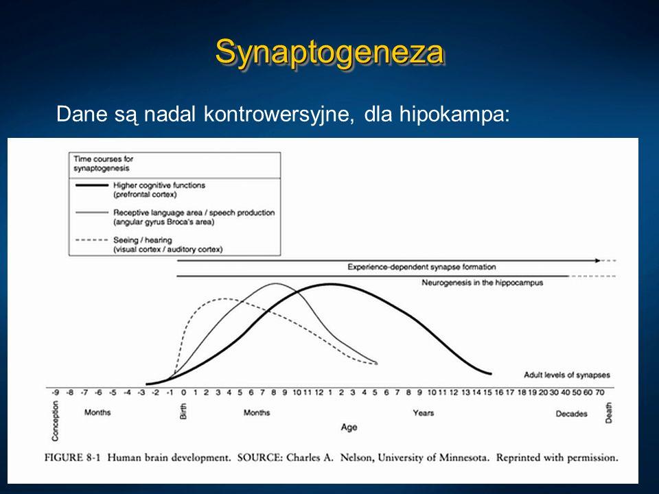 Synaptogeneza Dane są nadal kontrowersyjne, dla hipokampa: