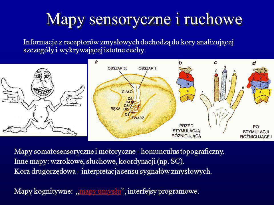 Mapy sensoryczne i ruchowe