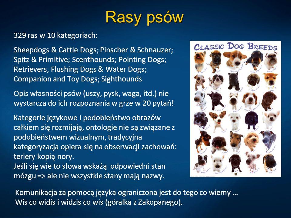 Rasy psów 329 ras w 10 kategoriach: