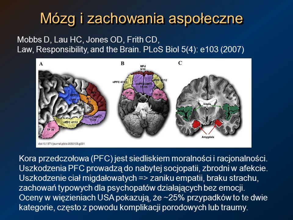 Mózg i zachowania aspołeczne