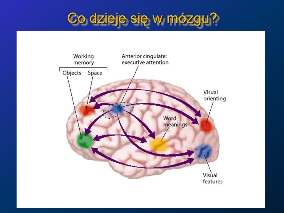 Co dzieje się w mózgu