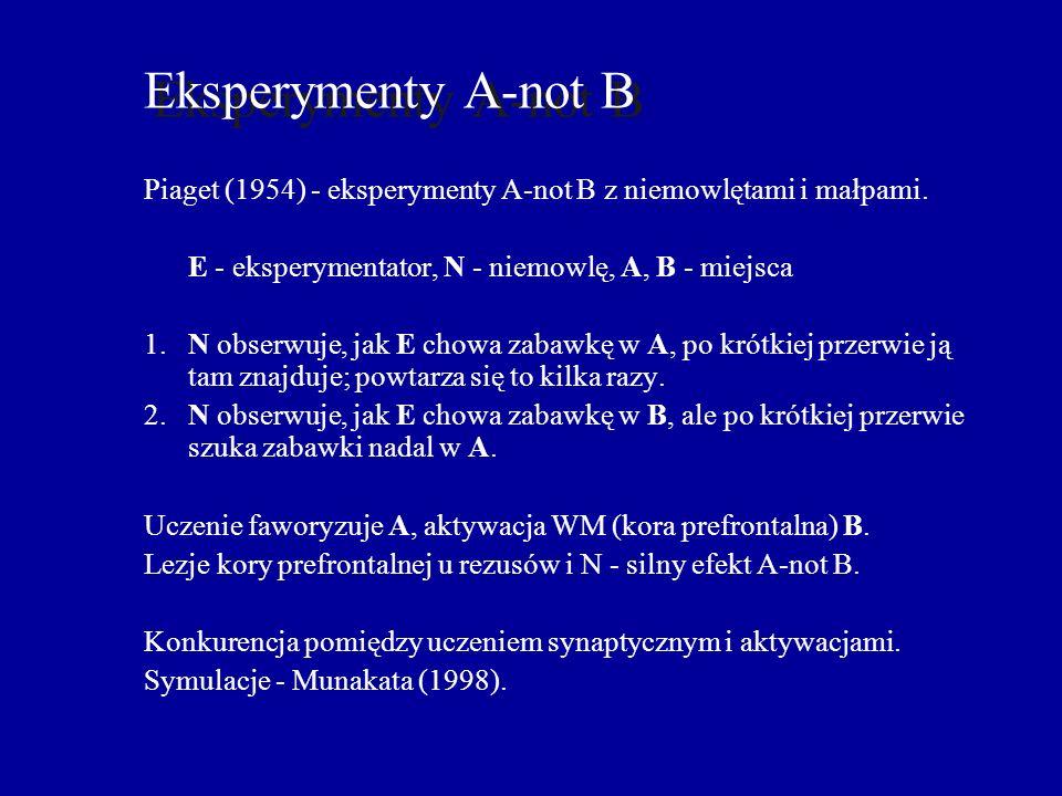 Eksperymenty A-not B Piaget (1954) - eksperymenty A-not B z niemowlętami i małpami. E - eksperymentator, N - niemowlę, A, B - miejsca.