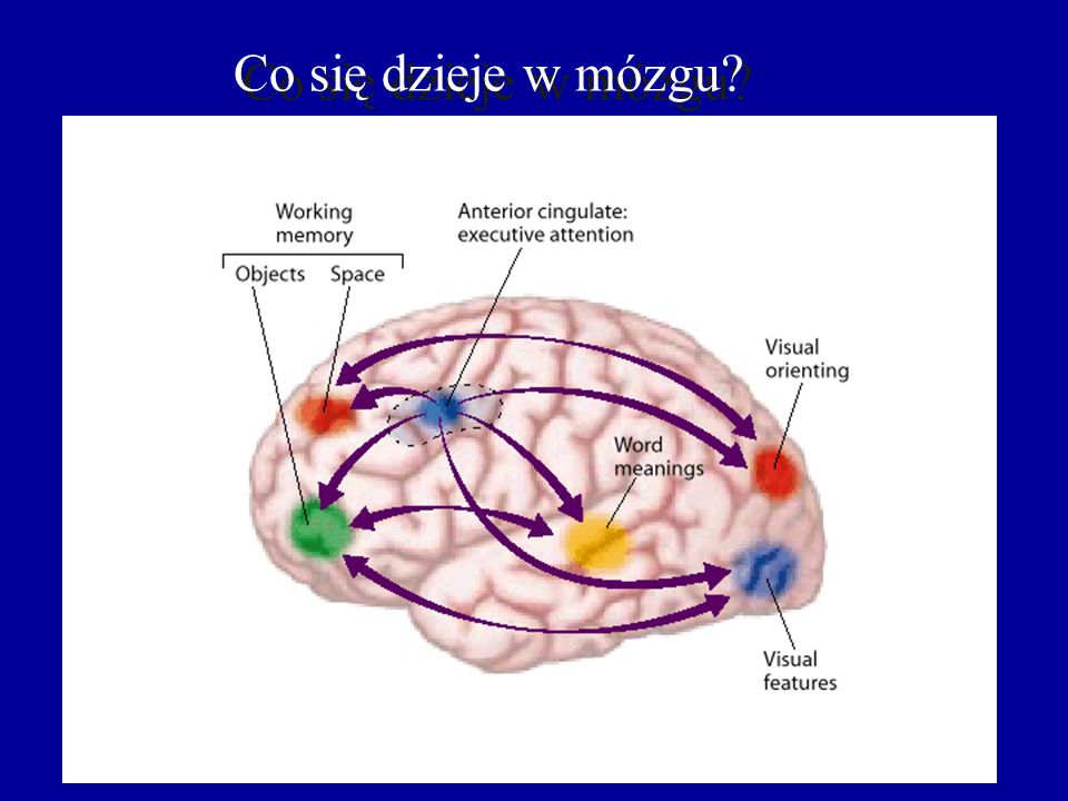 Co się dzieje w mózgu