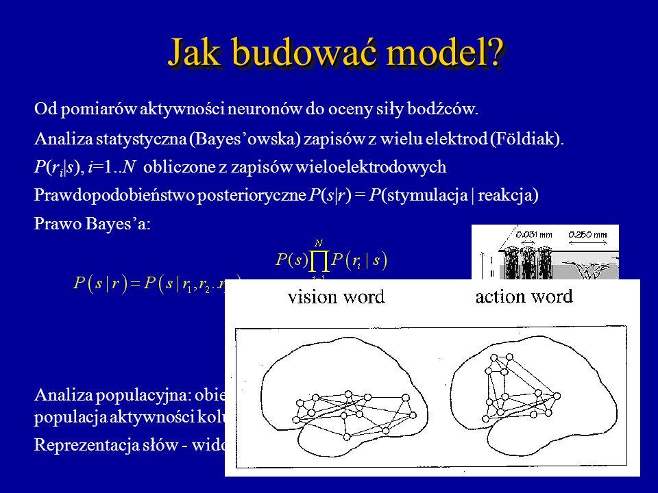 Jak budować model Od pomiarów aktywności neuronów do oceny siły bodźców. Analiza statystyczna (Bayes'owska) zapisów z wielu elektrod (Földiak).