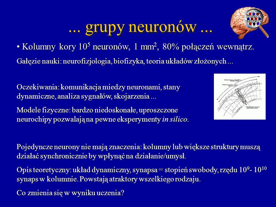 ... grupy neuronów ... Kolumny kory 105 neuronów, 1 mm2, 80% połączeń wewnątrz.