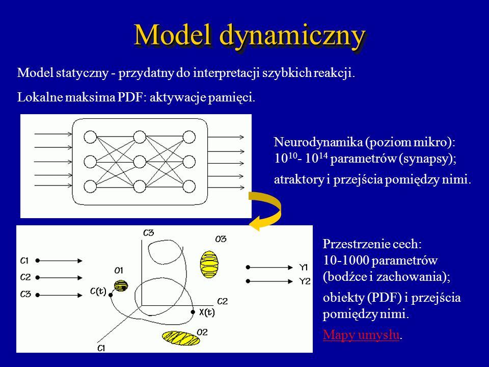 Model dynamiczny Model statyczny - przydatny do interpretacji szybkich reakcji. Lokalne maksima PDF: aktywacje pamięci.