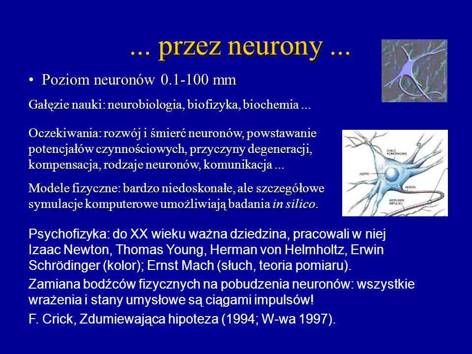 ... przez neurony ... Poziom neuronów 0.1-100 mm