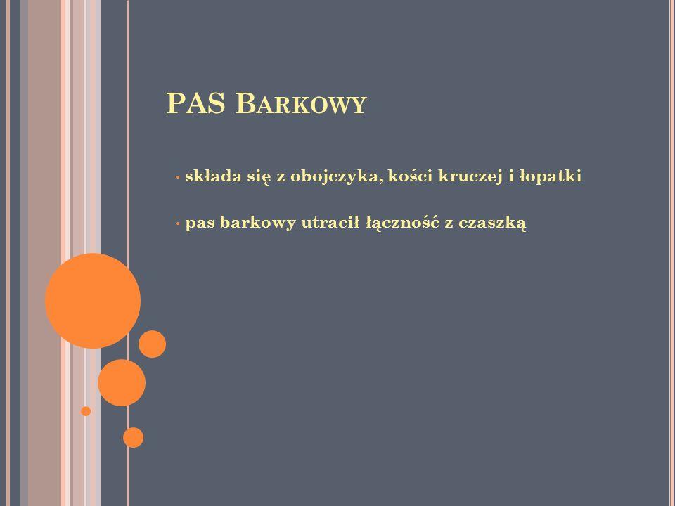 PAS Barkowy składa się z obojczyka, kości kruczej i łopatki