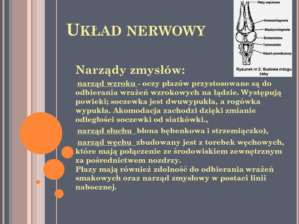 Układ nerwowy Narządy zmysłów: