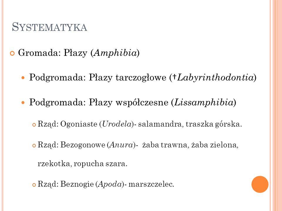 Systematyka Gromada: Płazy (Amphibia)