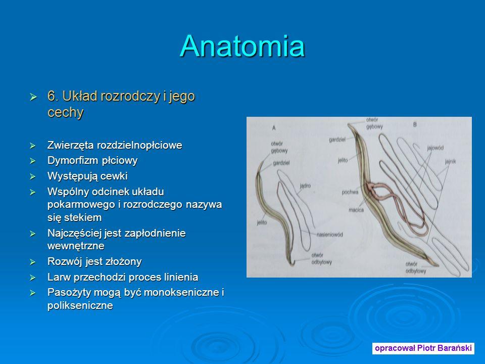 Anatomia 6. Układ rozrodczy i jego cechy Zwierzęta rozdzielnopłciowe