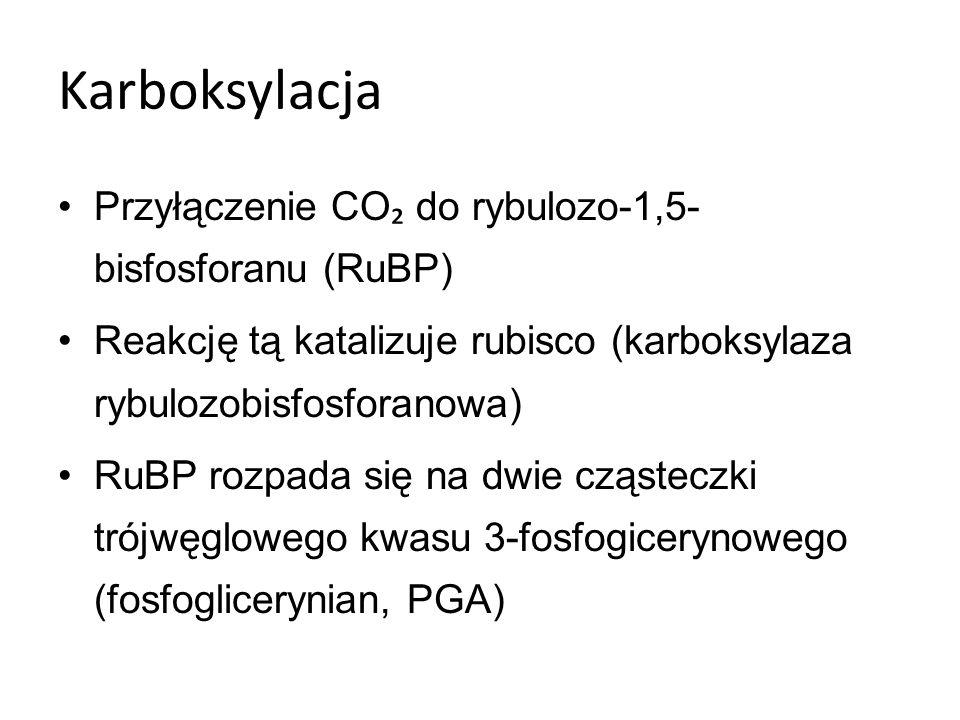 Karboksylacja Przyłączenie CO₂ do rybulozo-1,5- bisfosforanu (RuBP)