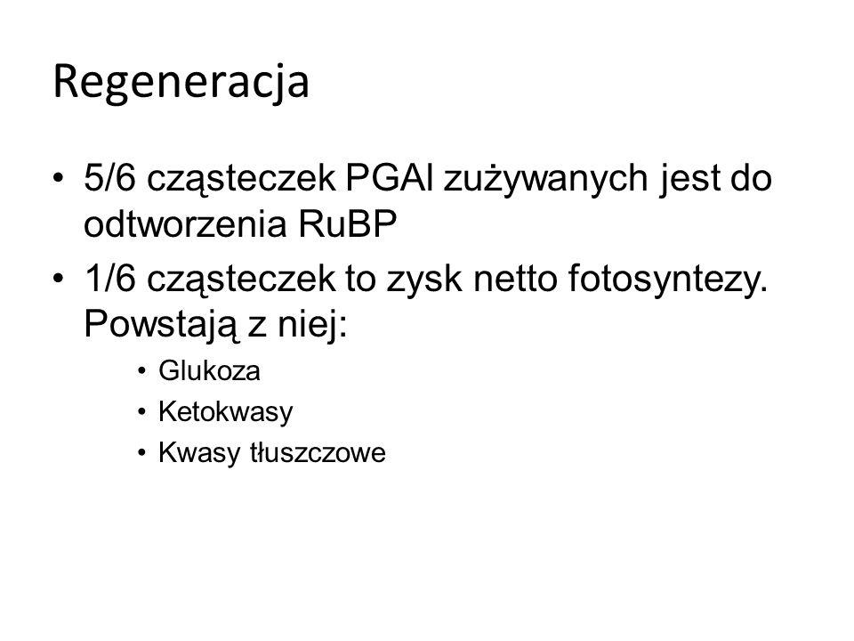 Regeneracja 5/6 cząsteczek PGAl zużywanych jest do odtworzenia RuBP