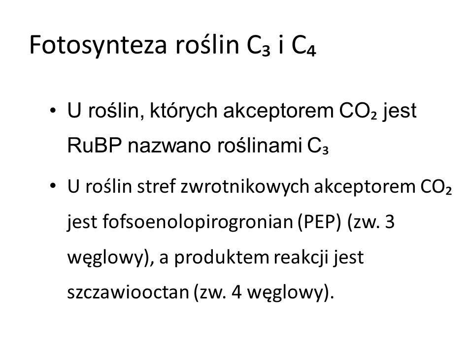 Fotosynteza roślin C₃ i C₄