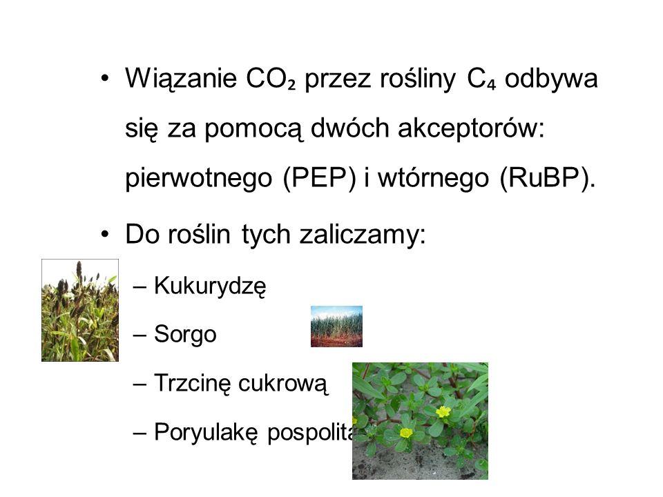 Do roślin tych zaliczamy: