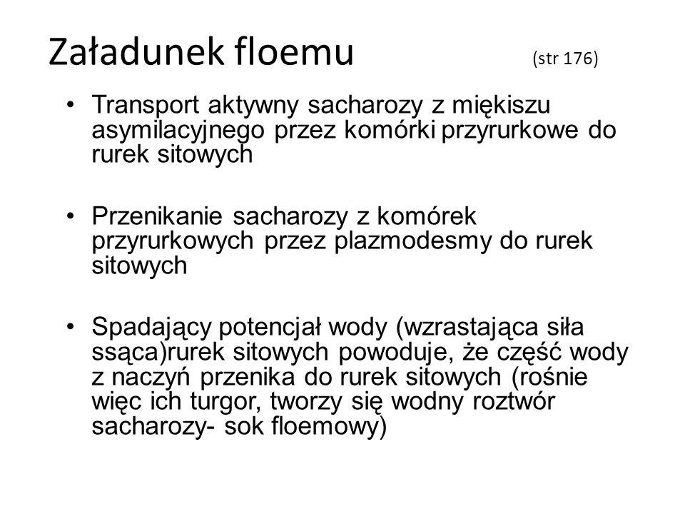 Załadunek floemu (str 176)