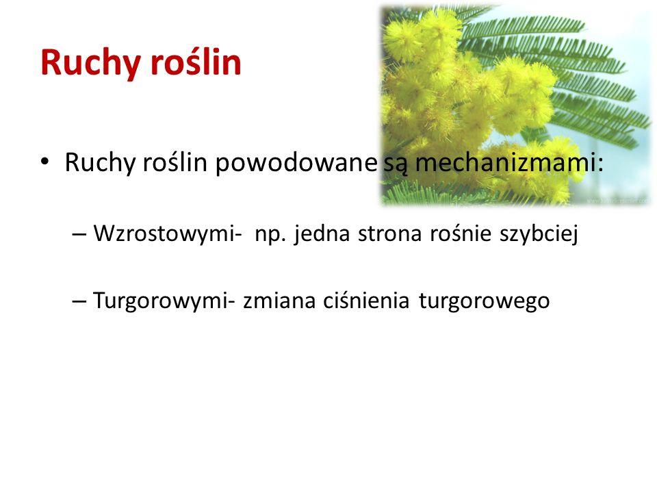 Ruchy roślin Ruchy roślin powodowane są mechanizmami: