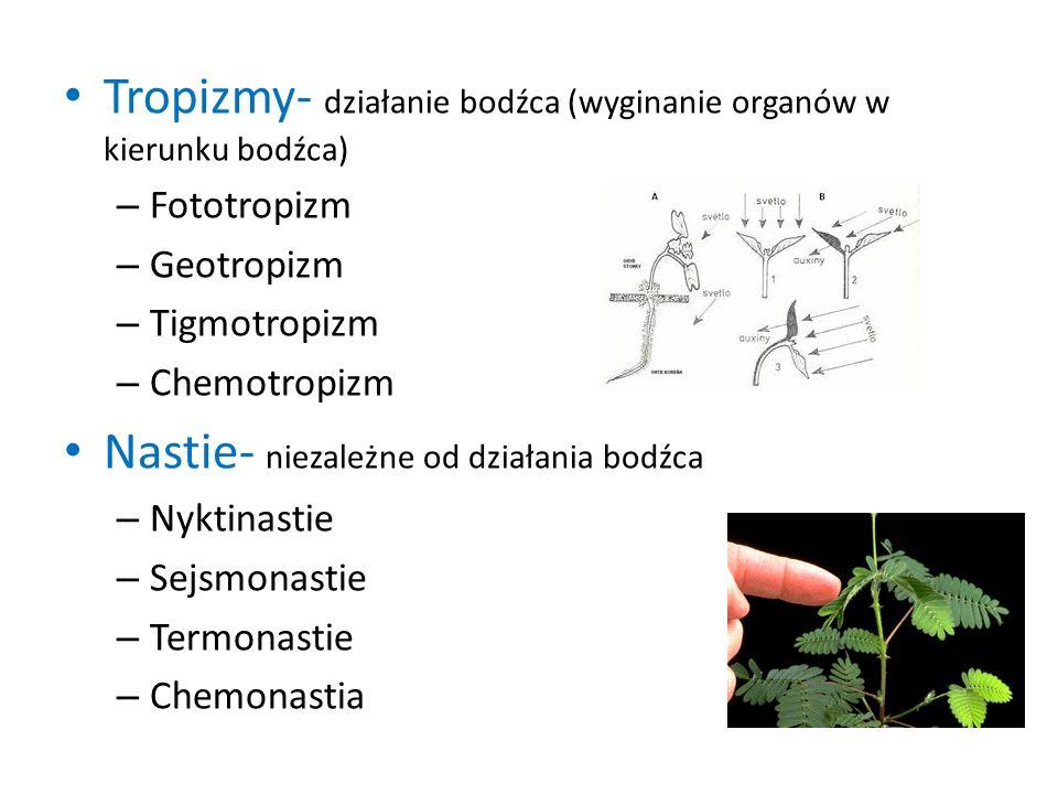 Tropizmy- działanie bodźca (wyginanie organów w kierunku bodźca)