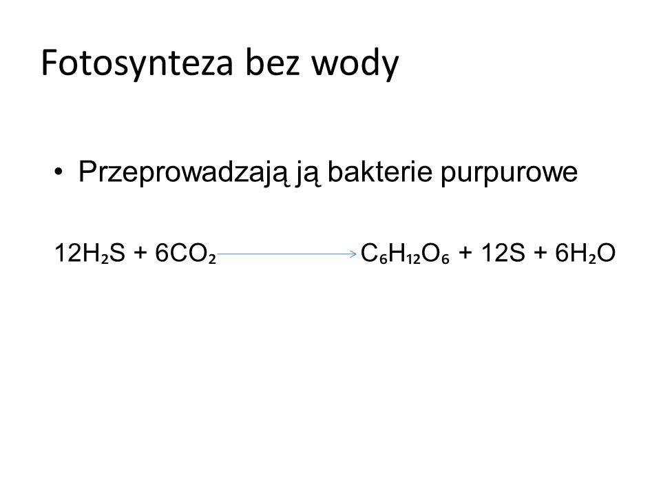 Fotosynteza bez wody Przeprowadzają ją bakterie purpurowe
