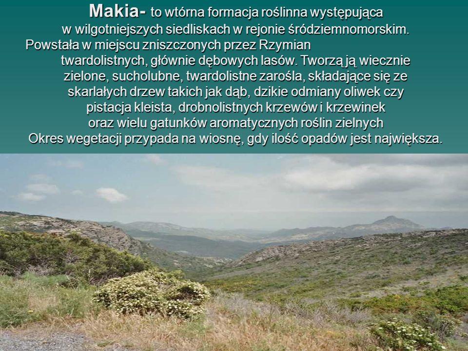 Makia- to wtórna formacja roślinna występująca