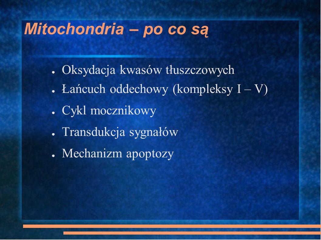 Mitochondria – po co są Oksydacja kwasów tłuszczowych