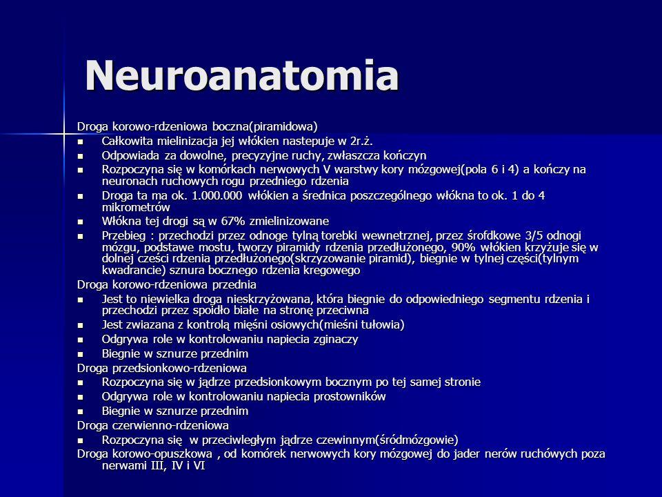 Neuroanatomia Droga korowo-rdzeniowa boczna(piramidowa)