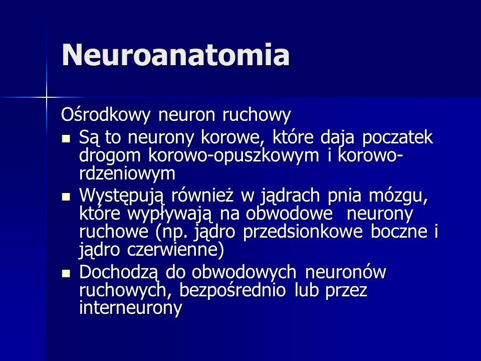 Neuroanatomia Ośrodkowy neuron ruchowy