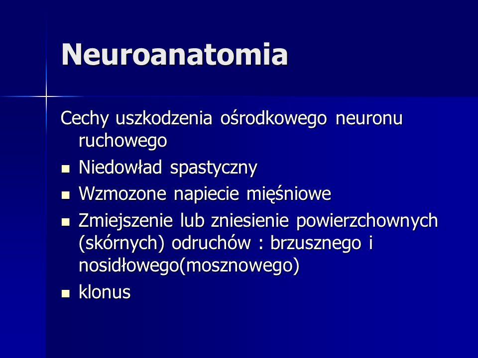Neuroanatomia Cechy uszkodzenia ośrodkowego neuronu ruchowego