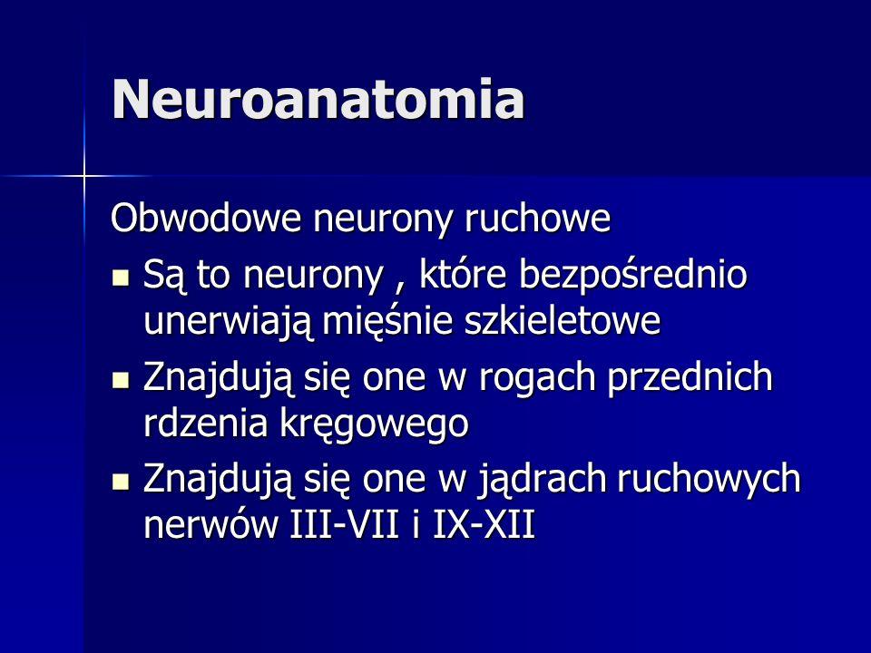 Neuroanatomia Obwodowe neurony ruchowe