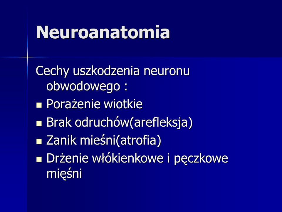 Neuroanatomia Cechy uszkodzenia neuronu obwodowego : Porażenie wiotkie